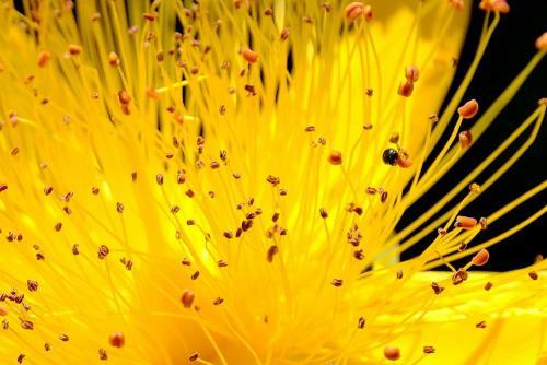 20200529 fleurs JE3M1947