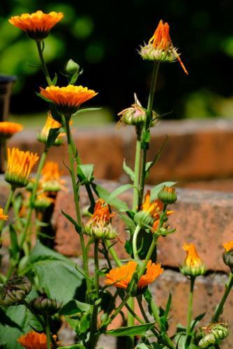 20200529 fleurs JE3M1960 2